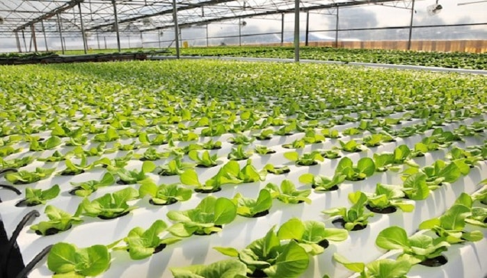 26+Hydroponic Greenhouse Production