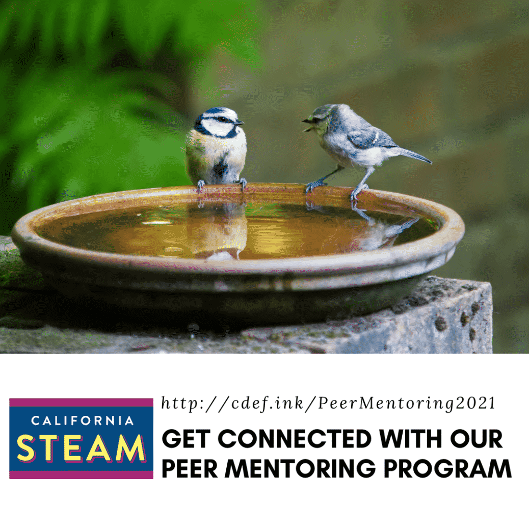 Two birds sitting on a bowl of water. Text on the image says to get connected with our steam peer mentoring program.