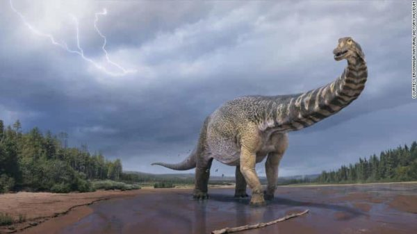 An artist's impression of Australotitan cooperensis, the largest known dinosaur discovered in Australia.