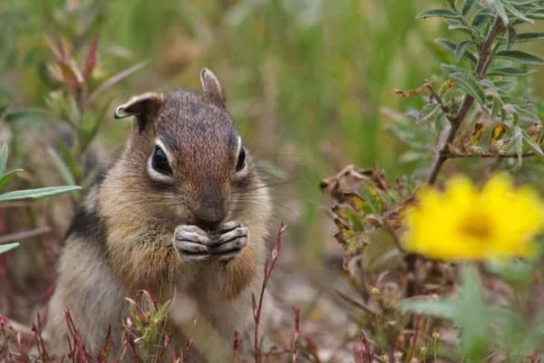 Squirrels have personality traits similar to humans, new study shows