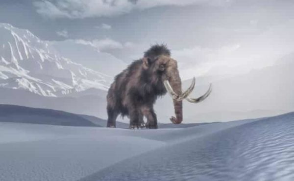 Colossal hopes to help bring the woolly mammoth back from extinction.