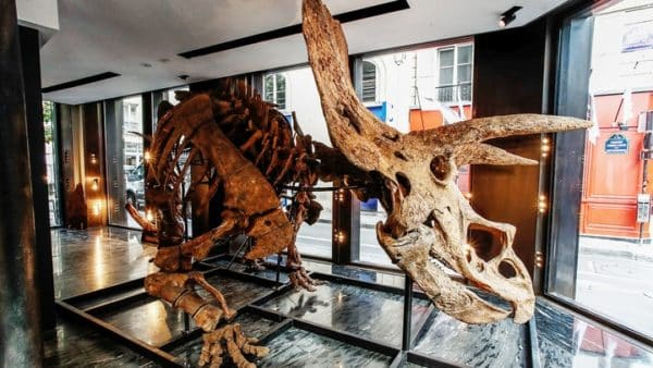 The world's largest known triceratops skeleton